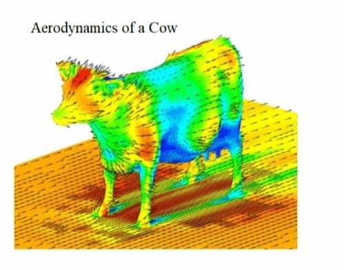 cow12.jpg
