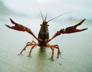 crayfish-on-shore.jpg