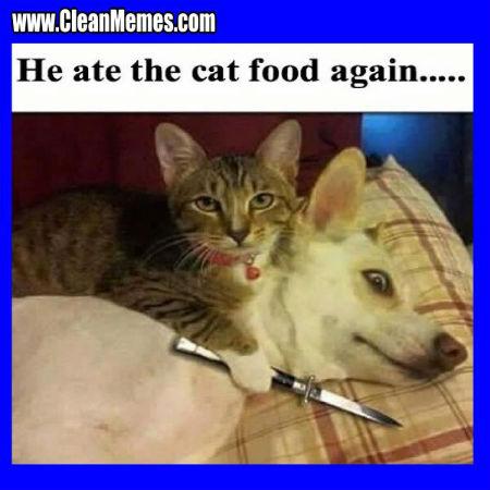 d590735f1cf3bb6d3e00b7f10ecd1fba--pet-memes-funny-cat-memes.jpg