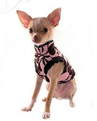 dog_lingerie.jpg