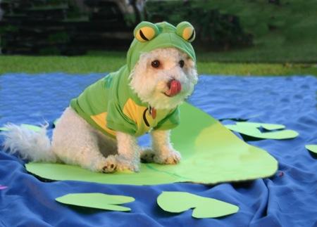 dogfrog.jpg