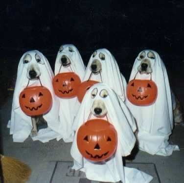 dogghosts.jpg