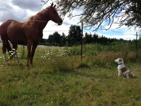 doghorse.jpg
