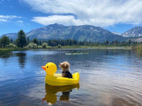doginduckboat.jpg