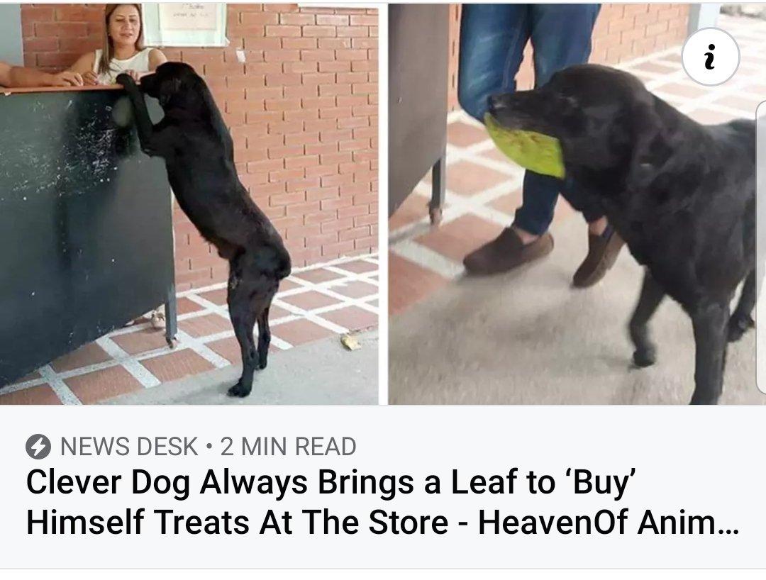 dogleaf.jpg