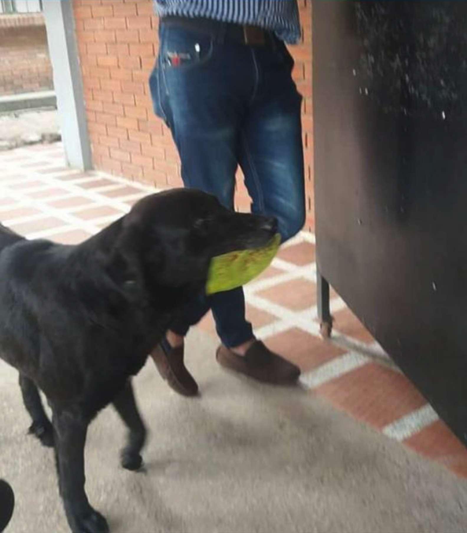 dogleaf2.jpg