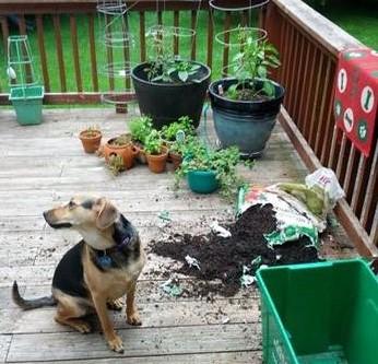 dognplant2.jpg
