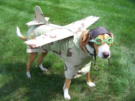 dogplane.jpg