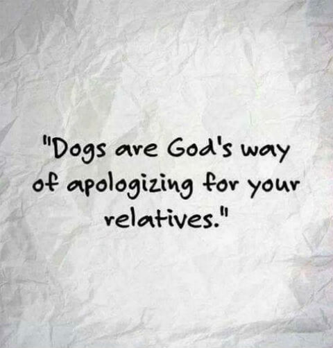 dogs gods way of.jpg