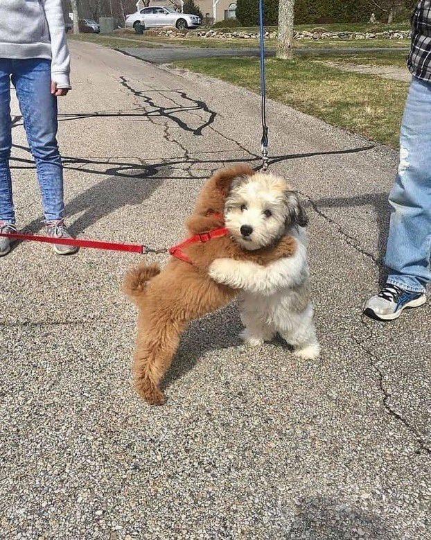 dogshugging.jpg