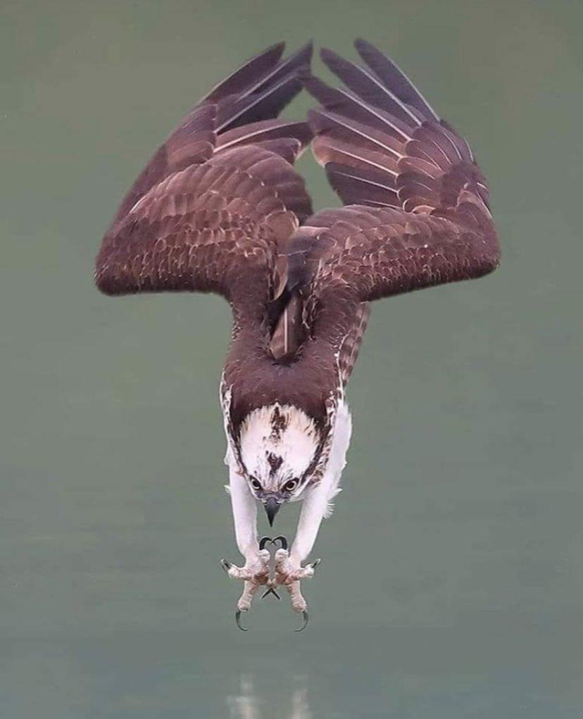 eaglefishing.jpg