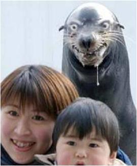evil_seal.jpg