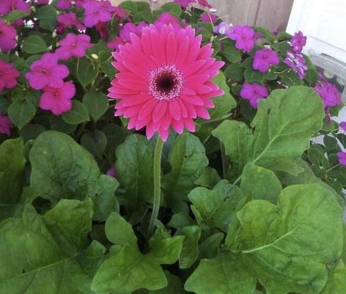 fastfreefallflower.jpg