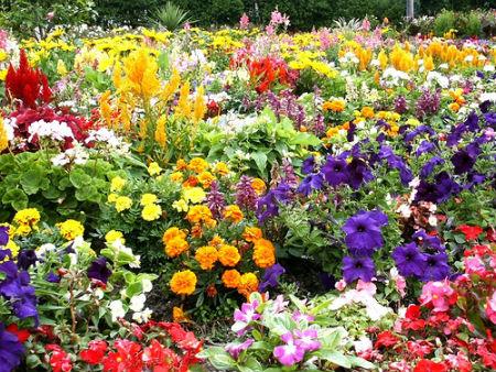 flower-garden-pretty.jpg