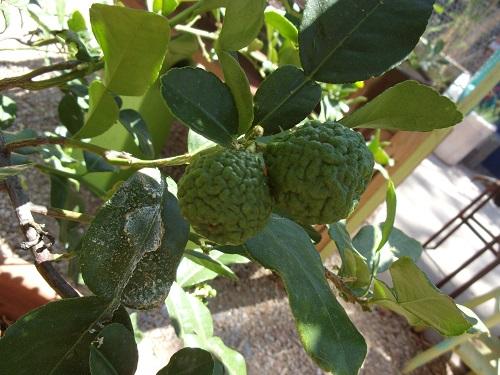 fruityd1.JPG