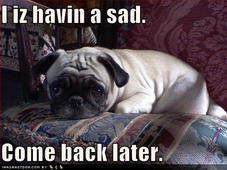 funny-dog-pictures-pug-has-sad.jpg
