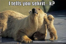 funny-pictures-bear-secrets.jpg
