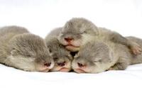 gal_otters_2.jpg