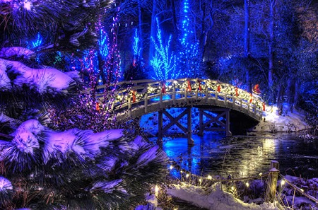 garden-of-lights-5.jpg