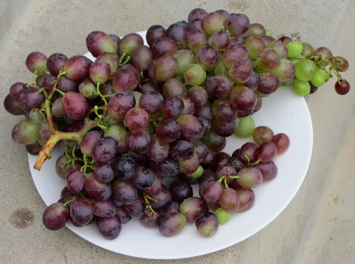 grapes51.JPG