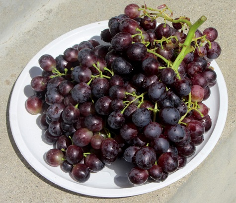 grapes6.JPG
