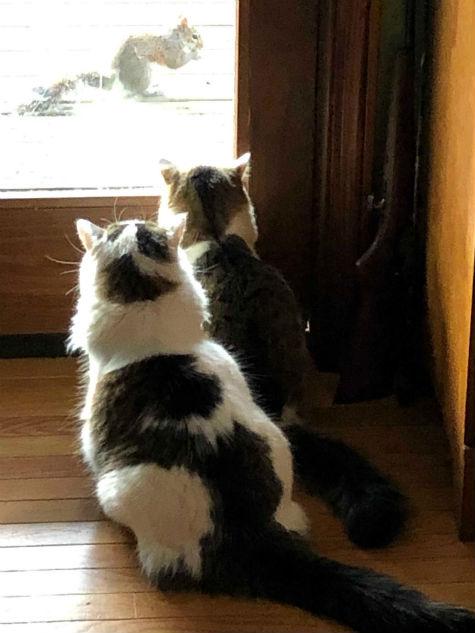 gregcats.jpg