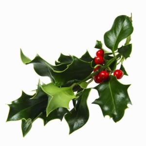 holly-sprig-300x300.jpg