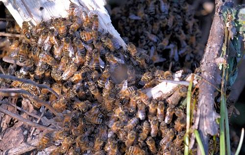 honeyscoop2.jpg