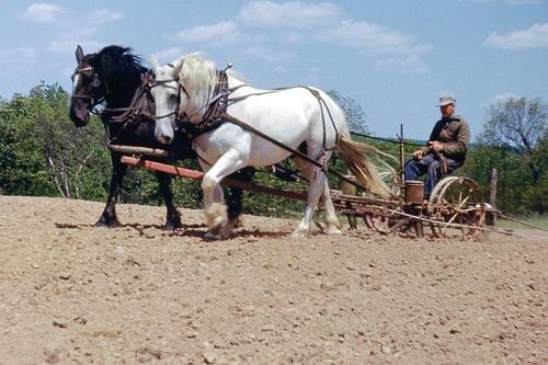 horseplow.jpg