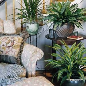 houseplants-04.jpg