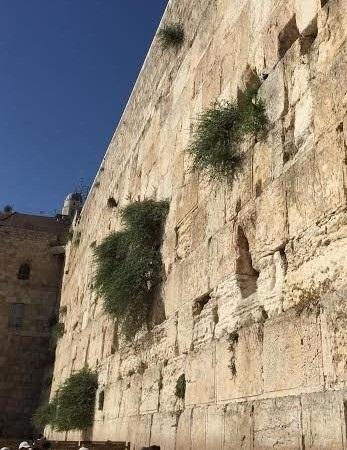 jerusalem-wall-p.jpg
