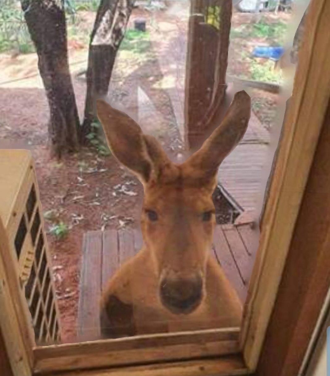 kangarooatthegate.jpg