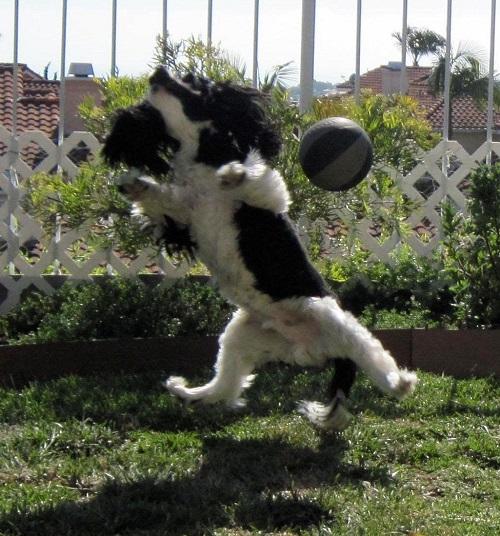 kaznball.jpg