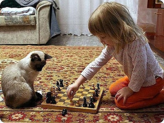 kitteh plays chess with little girl_525.jpg