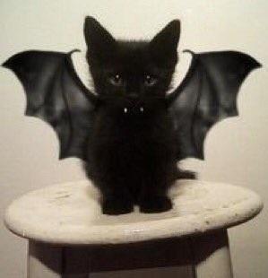 kittenbat.jpg