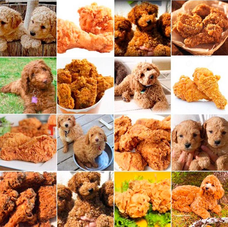 labradoodle or fried chicken.jpg
