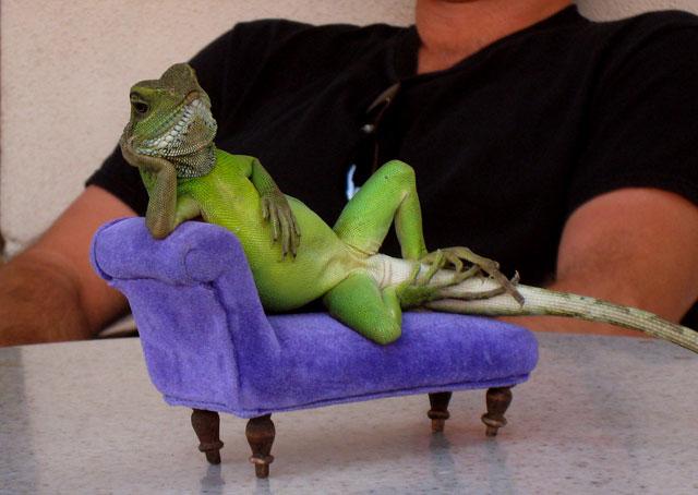 lizardlean.jpg