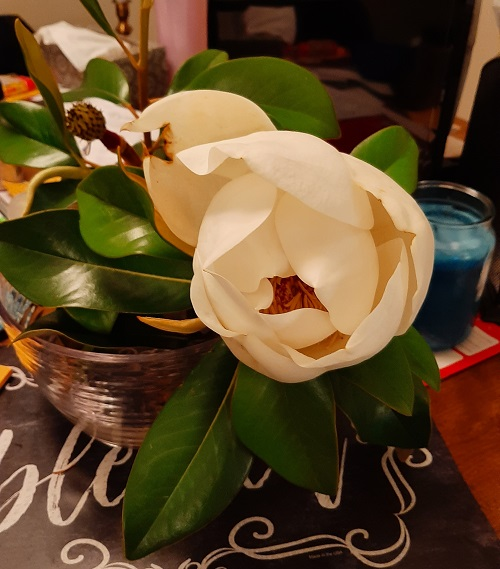 magnolione.jpg
