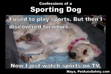 maya-sporting-dog.jpg