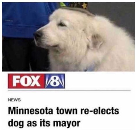 mayor dog.jpg