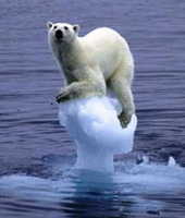 melting-ice-polar-bear.jpg