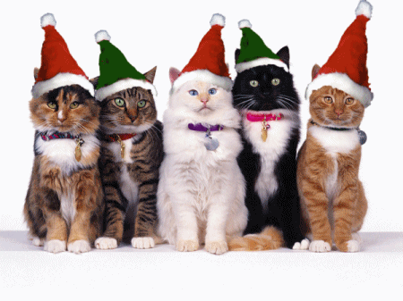 merry_christmas_cats-11421.png