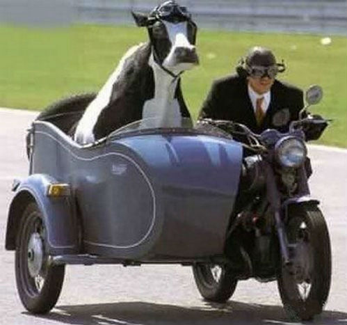 moo- ving in the fast lane .jpg