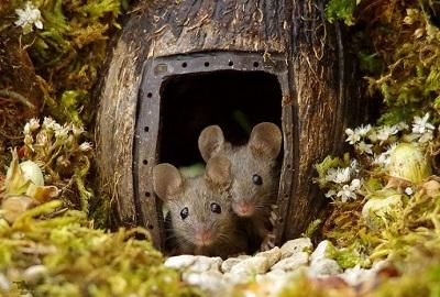 mousefam.jpg