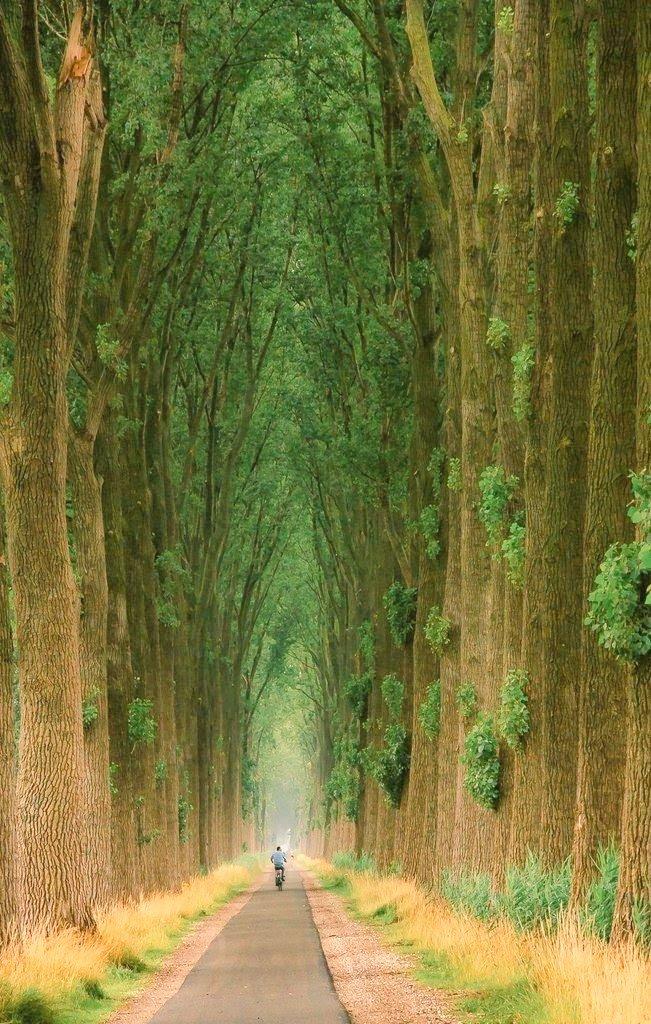 narrowpaththroughtalltrees.jfif