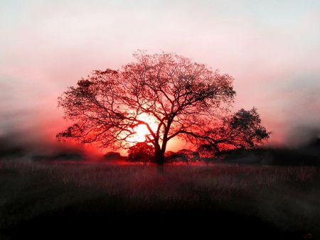 nature-trees-sunset-2.jpg