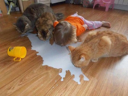 nousecrying over spilled milk.jpg