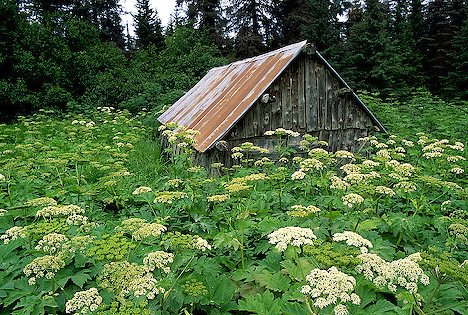 old-barn-surrounded-by-wildflowers_2791.jpg