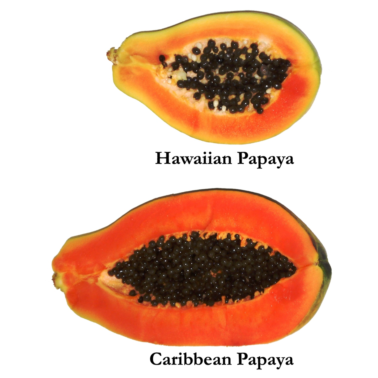papaya_hawaiian_caribbean.jpg