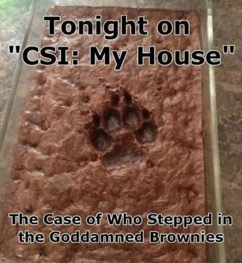 paw-print-brownies.jpg